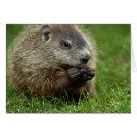Groundhog Day Woody Greeting Card