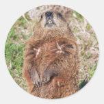 Groundhog Etiqueta Redonda