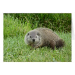 Groundhog Felicitaciones