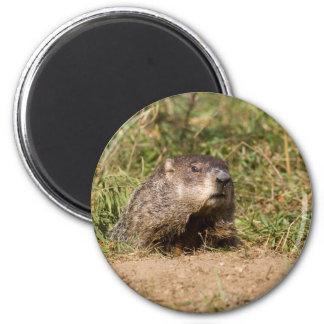 Groundhog Iman De Nevera