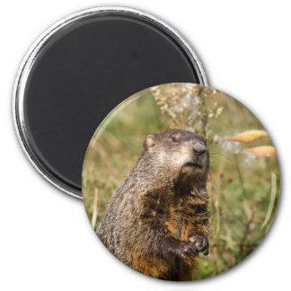 Groundhog Imán