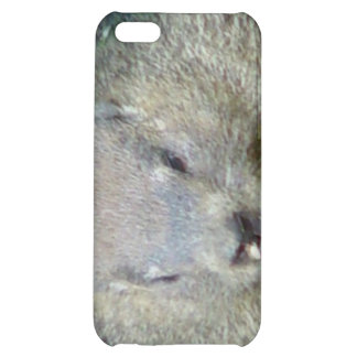 Groundhog iPhone Case Cover For iPhone 5C