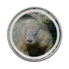Groundhog Jelly Belly Candy Tin at Zazzle
