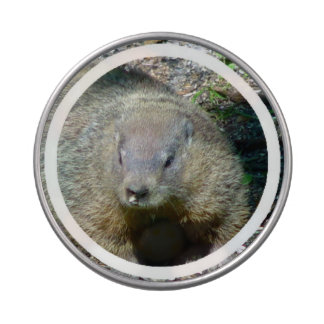 Groundhog Jelly Belly Candy Tin