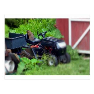 Groundhog on a Lawn Mower Postcard