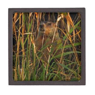 Groundhog on Watch Gift Box