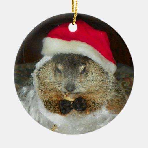 Groundhog/ornamento de Clara de la marmota Adorno