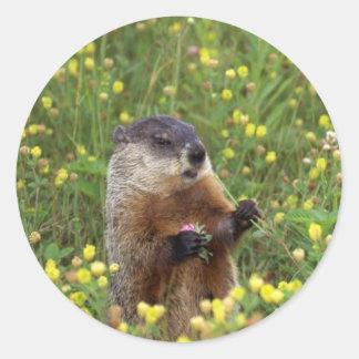 Groundhog Pose Sticker