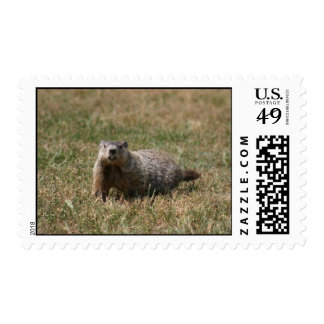 Groundhog postage stamp