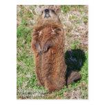 Groundhog Postales
