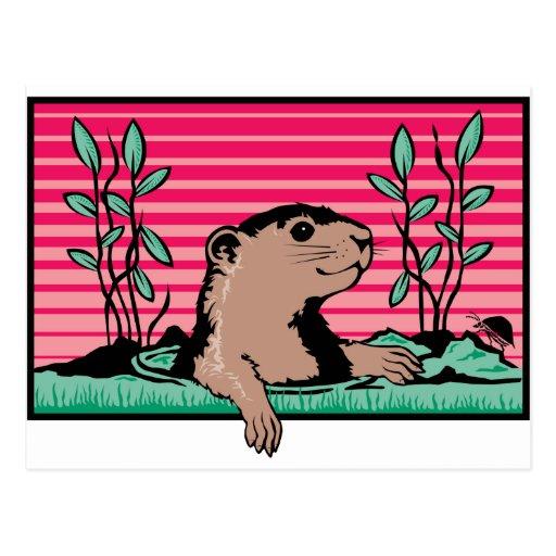 Groundhog Postcards
