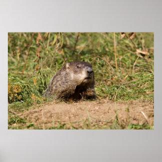 Groundhog Póster