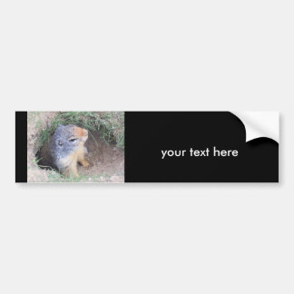 Groundhog su texto aquí pegatina para el parachoq pegatina de parachoque