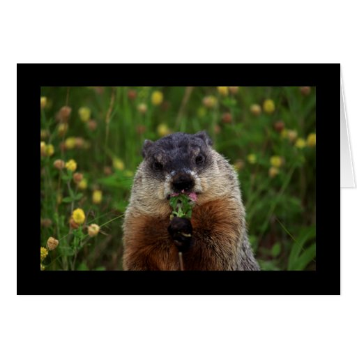Groundhog With Flowers Greeting Cards