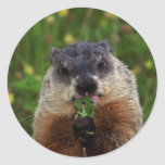 Groundhog With Flowers Round Stickers