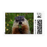 Groundhog With Flowers Stamp