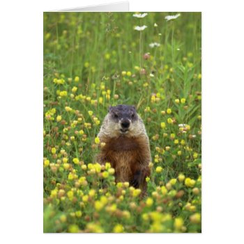 Groundhogs Rule Card by HolidayBug at Zazzle