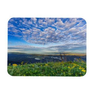 Groundsel Wildflowers in the Swan Range Magnet
