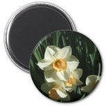 group1 054 Narcissus Refrigerator Magnets
