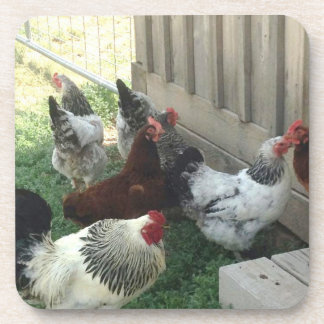 Group Chickens Coaster