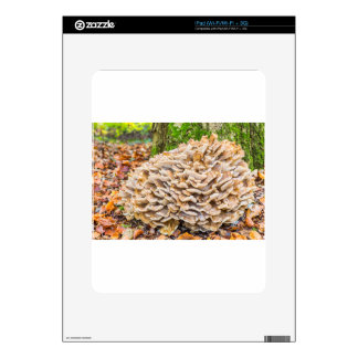 Group mushrooms with fall leaves.JPG Decals For iPad
