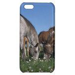 Group of Appaloosa Horses Grazing iPhone 5C Case