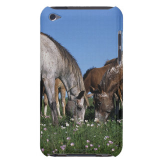 Group of Appaloosa Horses Grazing iPod Case-Mate Cases