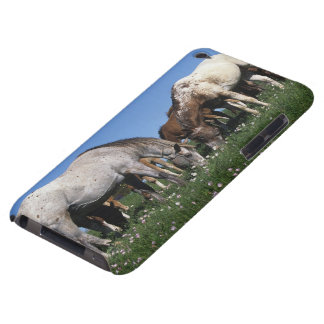 Group of Appaloosa Horses Grazing iPod Touch Case