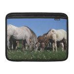 Group of Appaloosa Horses Grazing MacBook Sleeve