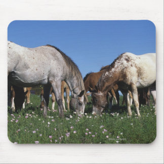 Group of Appaloosa Horses Grazing Mouse Pad