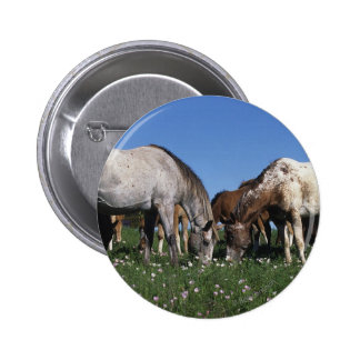 Group of Appaloosa Horses Grazing Pinback Button