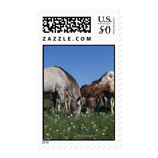 Group of Appaloosa Horses Grazing Postage