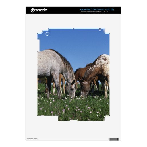 Group of Appaloosa Horses Grazing Skins For iPad 3