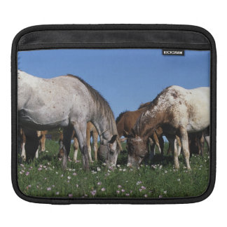 Group of Appaloosa Horses Grazing Sleeve For iPads