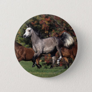 Group of Arab Horses Running Button