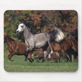 Group of Arab Horses Running Mouse Pad
