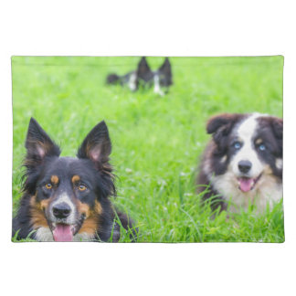 Group of border collies lying in green grass.JPG Cloth Placemat