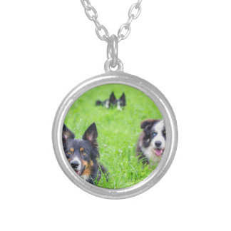 Group of border collies lying in green grass.JPG Silver Plated Necklace