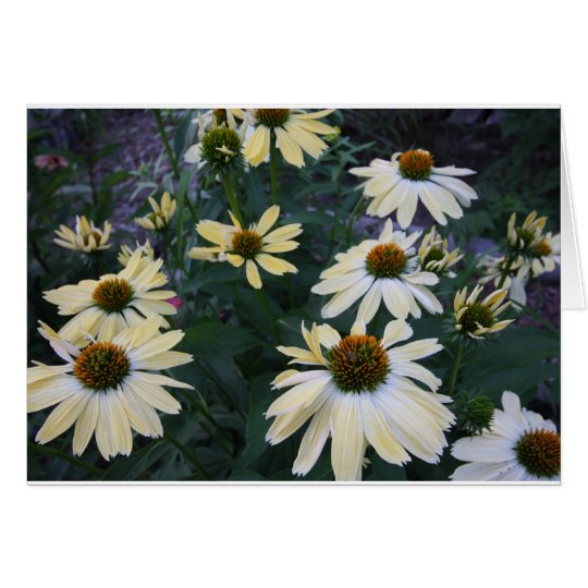GROUP OF CONEFLOWERS CARD