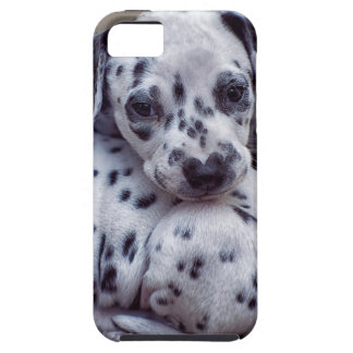 group of Dalmatian puppies iPhone SE/5/5s Case