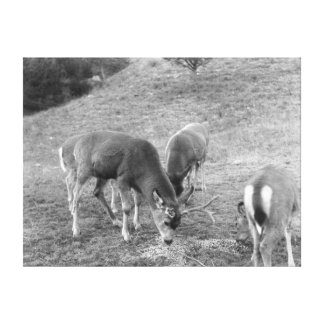Group of Deer at Hot Springs Photograph Canvas Prints