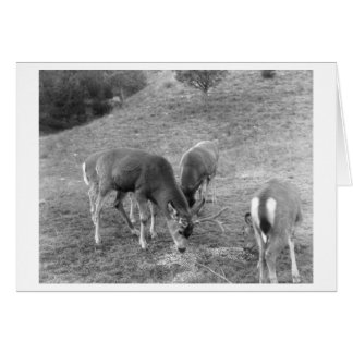 Group of Deer at Hot Springs Photograph Card