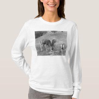 Group of Deer at Hot Springs Photograph T-Shirt
