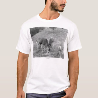 Group of Deer at Hot Springs Photograph T-Shirt