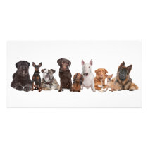 Group of Dogs Card