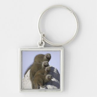 Group of Dwarf Mongoose on a Termite Mound in Silver-Colored Square Keychain