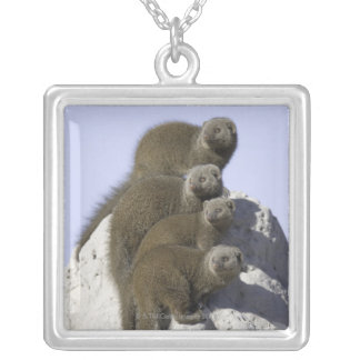Group of Dwarf Mongoose on a Termite Mound in Silver Plated Necklace