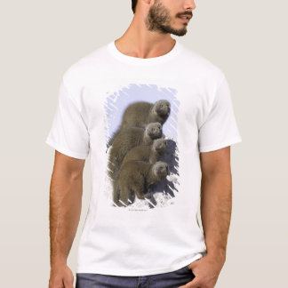 Group of Dwarf Mongoose on a Termite Mound in T-Shirt