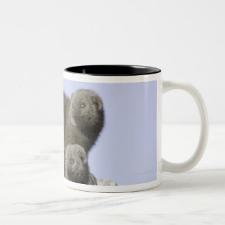 Group of Dwarf Mongoose on a Termite Mound in Two-Tone Coffee Mug