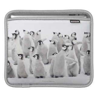 Group of Emperor penguins (Aptenodytes forsteri) Sleeves For iPads